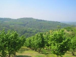 Grundstück mit Rustico im Piemont Italien kaufen vom ...