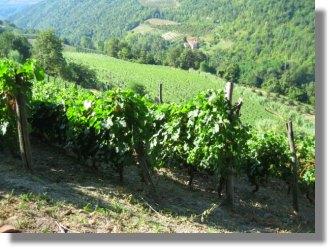 Cerretta Grundstücke Cuneo Piemont Italien kaufen vom ...