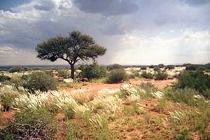 farm in namibia kaufen