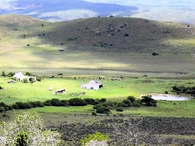 Game Reserve in Eastern Cape